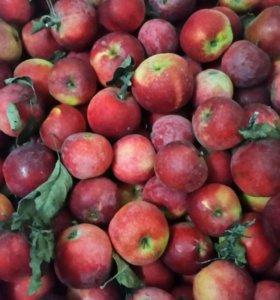 Яблоки со своего огорода