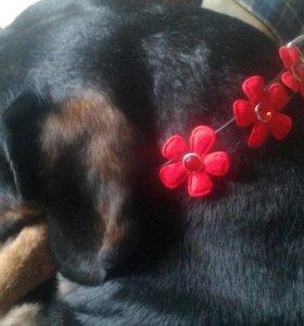 Ошейник новый для маленьких собак