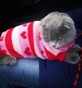 Свитер для кошек