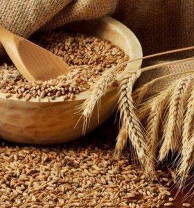 Пшеница, кукуруза, овес,  ячмень и мн. др.в розниц