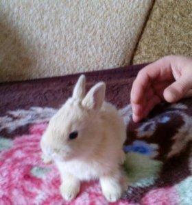 Маленькие дикоротивные кролики