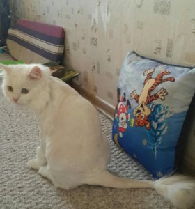 Груминг кошек и собак