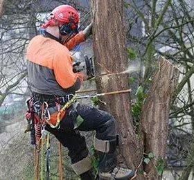 Спил деревьев , услуги землекопа , снос ветхих стр