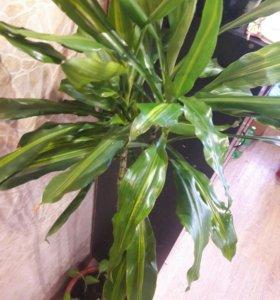 Шикарный цветок пальма. В бауцентре такой стоит 10