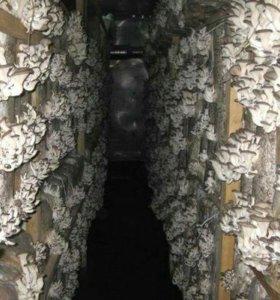 Цех по выращиванию грибов (вешенки)