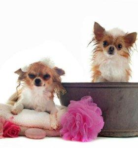 Стрижка и купание собак