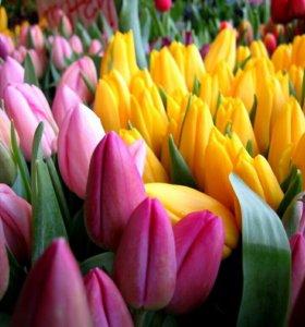 Цветы тюльпаны на 8 Марта оптом