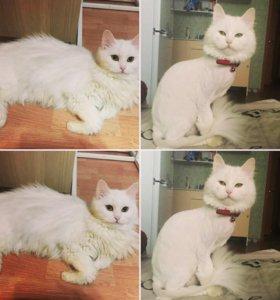 Груминг. Стрижка кошек