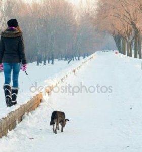 Выгуливаю вышу собаку