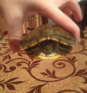 Продаю черепаху и аквариум