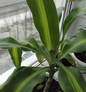 Растения комнатные.