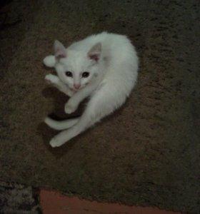 Котёнок.1,5 месяца, отдам в добрые руки
