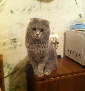Вязка с милым котиком