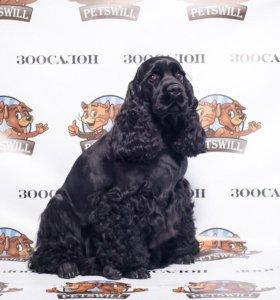 Профессиональная стрижка собак в Кирове!