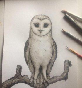 Индивидуальные занятия по рисованию