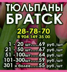 Тюльпаны Братск