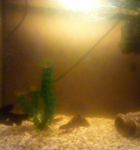 Рыбки и сомики