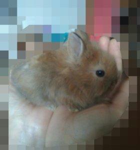 Декоративные кролики .