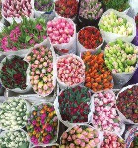 Тюльпаны лучшая цена!
