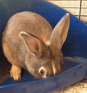 Кролик+ большая клетка