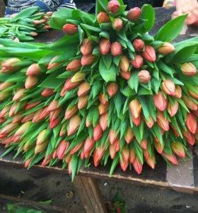 Тюльпаны высокие от 50 см