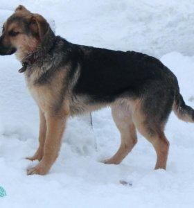 пёс Бакс (сентябрь 2016) из приюта