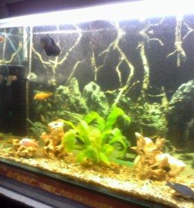 Продам аквариум)