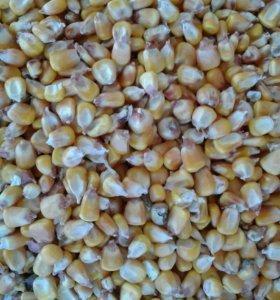 Кукуруза целая и дроблёная