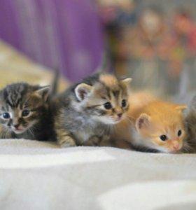 Отдадим милых котят в добрые руки!