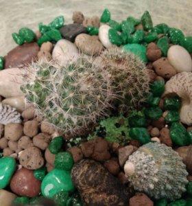 "Флорариум ""Зелёнаяпустыня"" мини-сад кактус подарок"