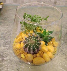 """Флорариум """"Янтарный"""" мини-садик кактус в подарок"""