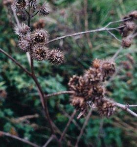 Фотосессии от 150₽ на природе