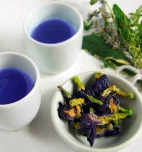 Синий чай - чай из цветов Клитории