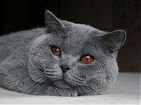 Кот-вязка