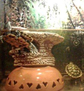 Черепашата с аквариумом