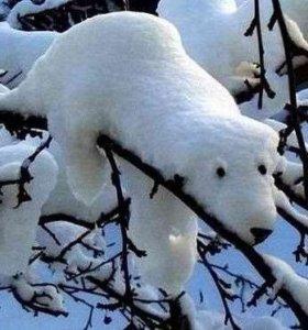 Снег недорого