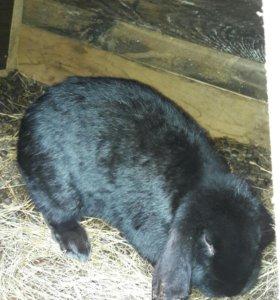 Кролики 11 месяцев порода боран