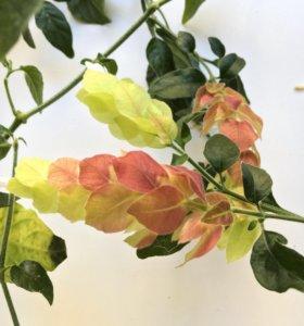 Очень необычное комнатное растение