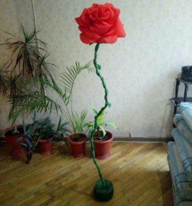 Ростовая роза 160 см .