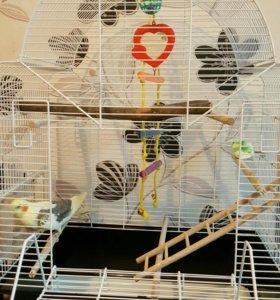 Попугай Корелла вместе с клеткой