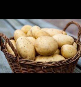 Продаю свои картофель с огорода. От 20 кг и выше!!