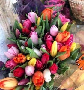 Тюльпаны к 8 Марта !