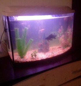 Аквариум с рыбами на 70 литров