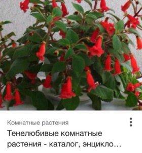 Цветы отростки очень красивые