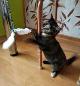 Котёнок-девочка добрым людям