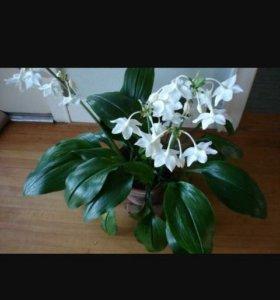 Цветы комнатное растение