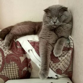 Вислоухий котик ждёт дам