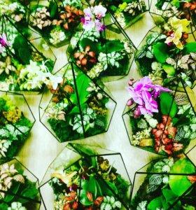 "Флорариум ""Орхидея в конусе"""