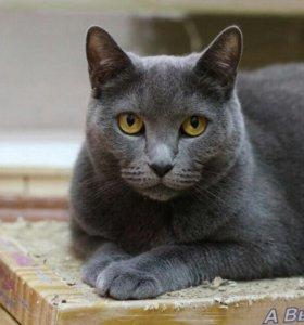 Кошка Пресли