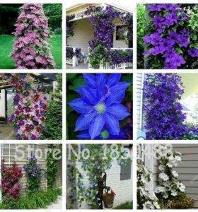 Семена экзотических цветов и растений